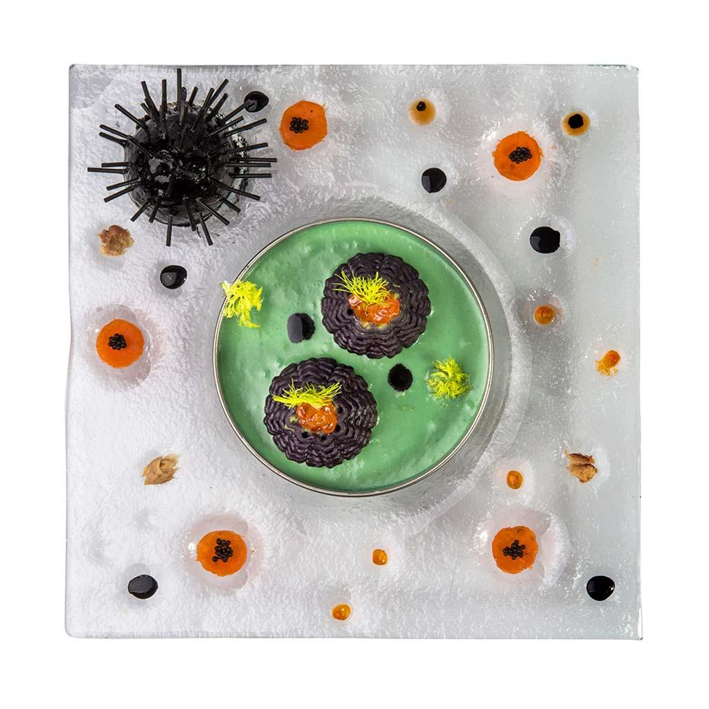 Sea urchin trilogy